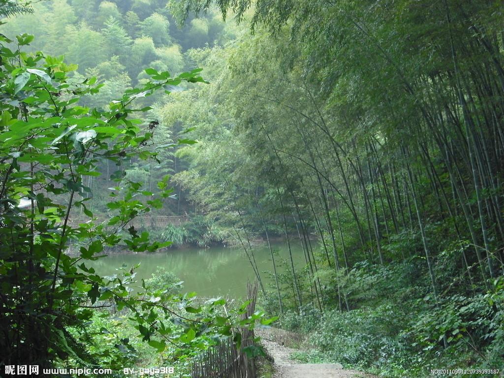 长林竹海风景区